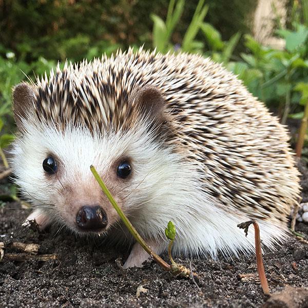 Meggie in de tuin