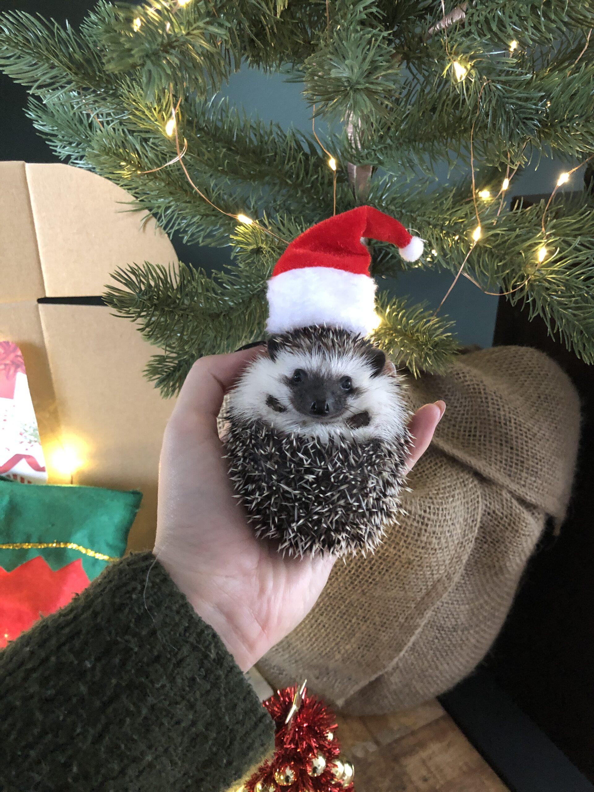 egel kerst